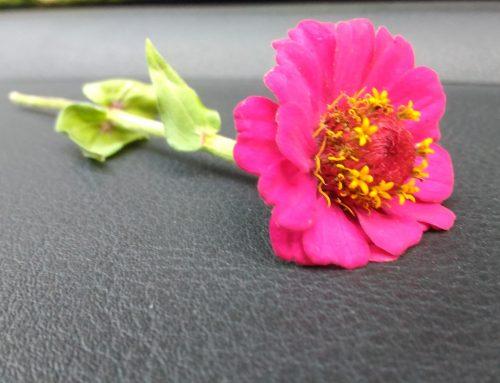 Empatia, quel fiore che spunta inaspettato