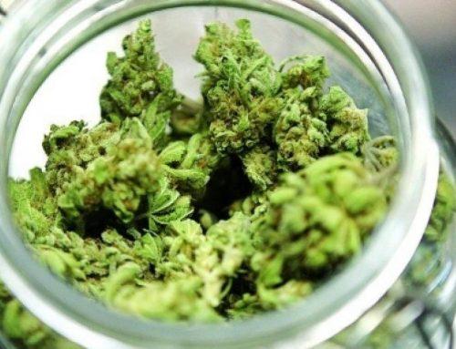 Cannabis: speranze, confusione e verità 'amare'